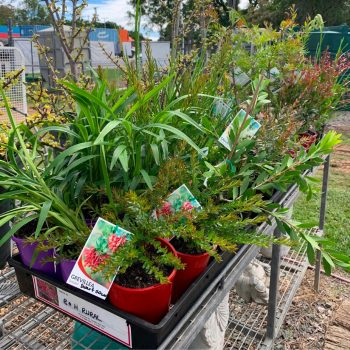 Gardening Supplies Tools