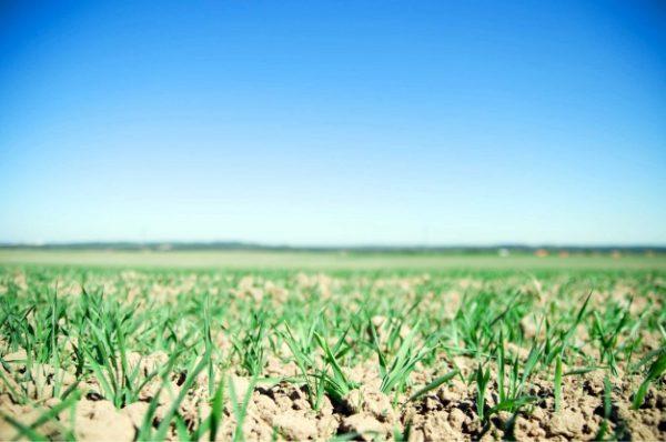 Seeds & Fertilizer