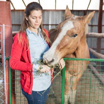 Stockfeeds & Animal Health / Vet Supplies